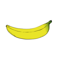 banana drawing vector image