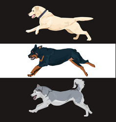 Running dogs collection for your design vector