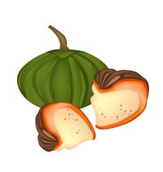 Delicious Egg Custard with Pumpkin vector image