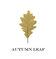 Autumn leaves isolated on white background simple vector