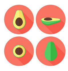 avocado fruit set in flat style with circles vector image