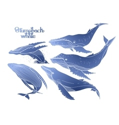 Graphic humpback whales vector