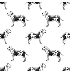 hand drawn seamless pattern with american bulldogs vector image