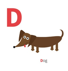 Letter d dachshund dog zoo alphabet english abc vector