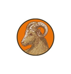 Ram Goat Head Circle Drawing vector image