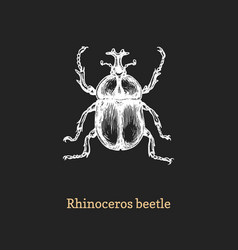 rhinoceros beetle drawn insect in vector image