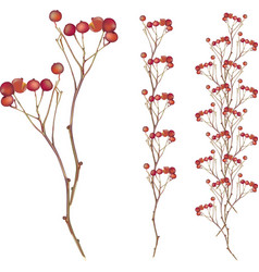 autumn red berry tree vector image