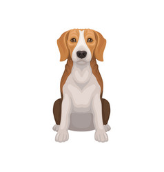 beagle with shiny eyes in sitting position small vector image