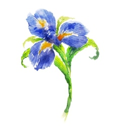 Blue watercolor iris flower vector image