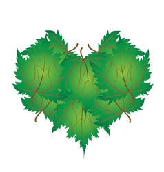 Green maple leaves in a heart shape vector