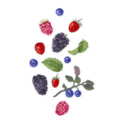hand drawn berries on white background vector image