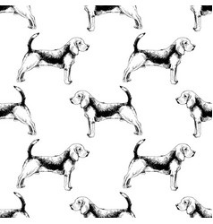 seamless pattern with beagles vector image