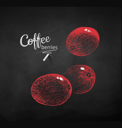 chalk drawn sketches of coffee berries vector image