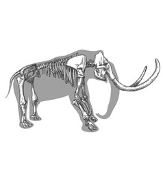 Engraving of mammoth skeleton vector