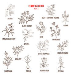 Febrifuge herbs collection part 3 vector