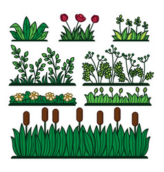 Greenery green grass flower plants and decorative vector