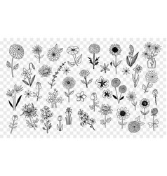 set of doodle sketch flowers vector image vector image