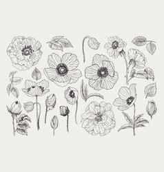 Big set of monochrome vintage flowers vector