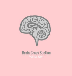 brain cross section vector image