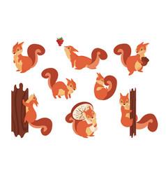 Cartoon squirrel cute wild animal with acorn vector