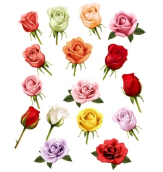 collection different roses vector image