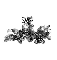 hand drawn background with berries vector image