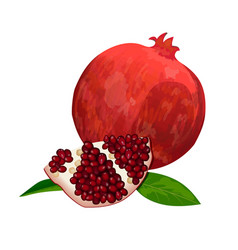 Ripe red pomegranate and slices isolated on white vector