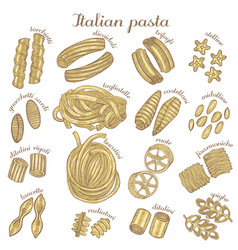 colored set of different pasta shapes vector image vector image