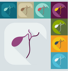 Flat modern design with shadow icons spleen vector