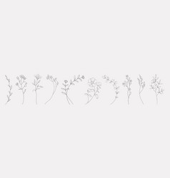 Hand drawn herbs minimal floral monograms vector