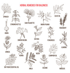 Herbal remedies for baldness vector