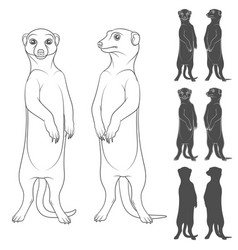 Set of depicting the meerkats vector