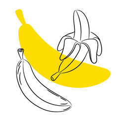 Sketch banana fruit vector