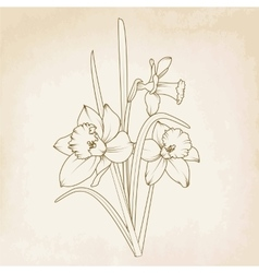 Beautiful detailed narcissus daffodils bouquet vector image