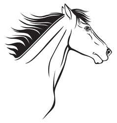 horse nose vector image vector image