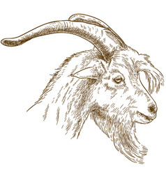 engraving goat head vector image