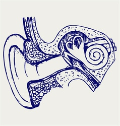 Human internal ear diagram vector