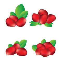 Pomegranate seed fruit vector