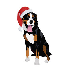 swiss mountain dog with christmas hat isolated on vector image
