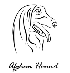 Afghan Hound vector image vector image
