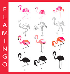 flamingo birds set cartoon outline and vector image vector image