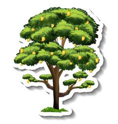 A mango tree sticker on white background vector