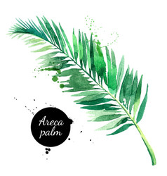 hand drawn sketch watercolor tropical leaf of vector image