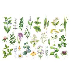Hand drawn watercolor set herbs vector