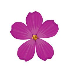 plumeria flower spring image vector image