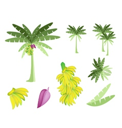 Set of Banana Tree with Bananas and Blossom vector image