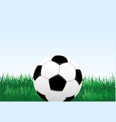 Soccer ball and green grass vector