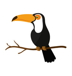 Toucan exotic bird icon vector