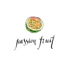 watercolor passion fruit vector image