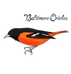 Bird baltimore orioles vector